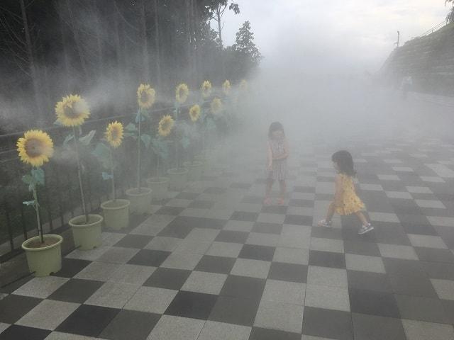 夏の三島スカイウォーク ひまわりミスト