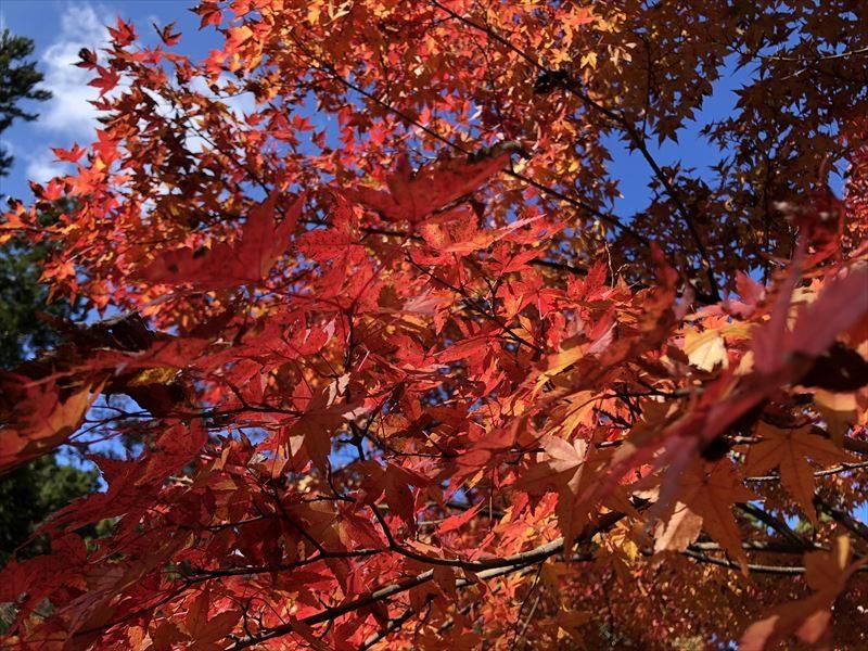 道志の森キャンプ場 紅葉