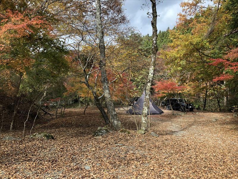 道志の森キャンプ場 紅葉の下に設営できるサイト
