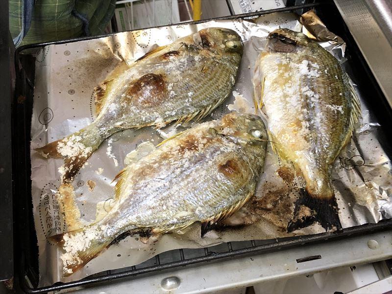 ボートで海釣り ヘダイの塩焼き