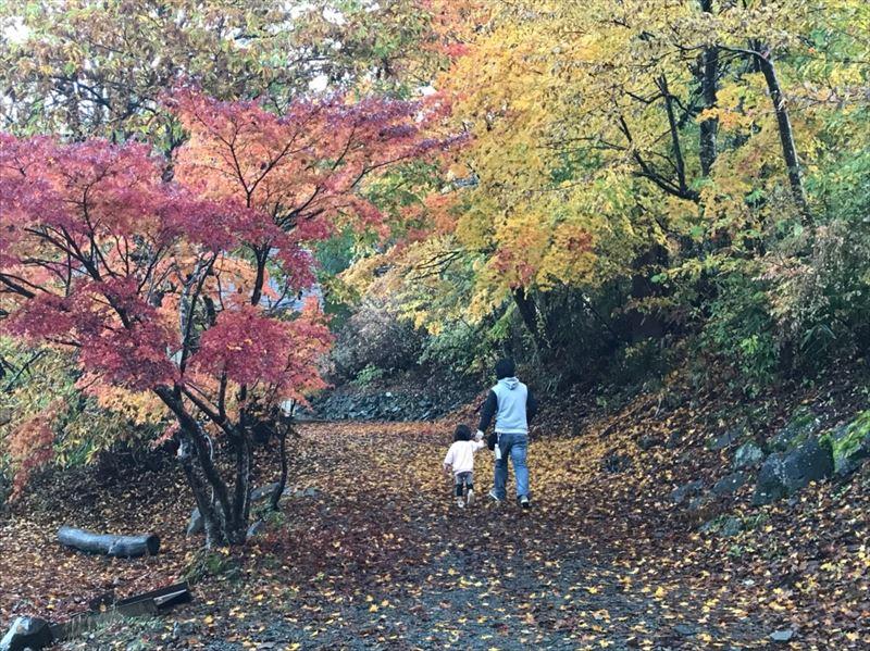 道志の森キャンプ場 滝サイトへ続く道(キャビン横)