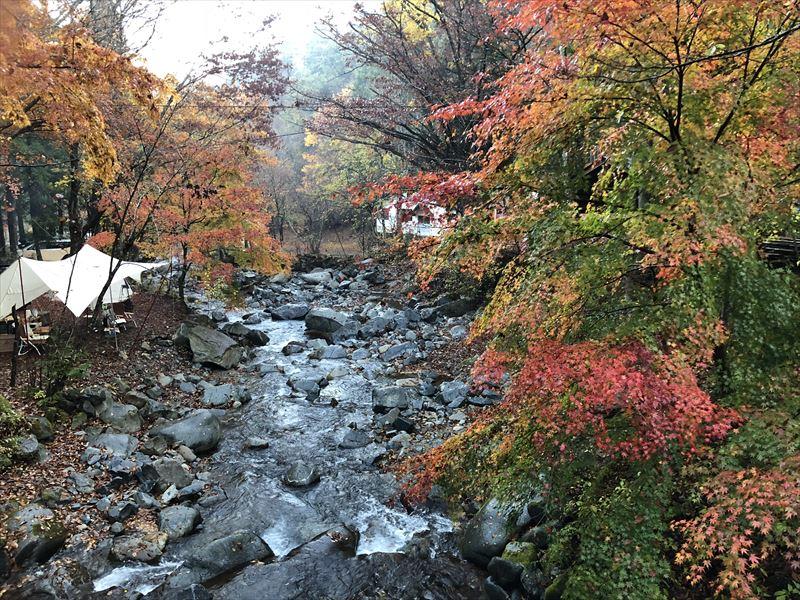 道志の森キャンプ場 管理棟近くの吊り橋から見える紅葉(下流)