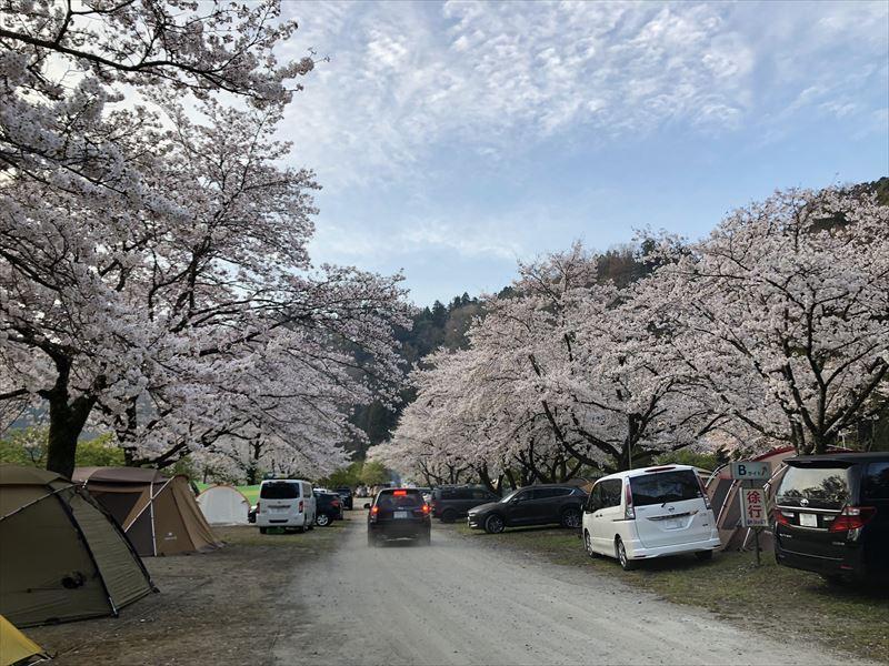 青野原オートキャンプ場 Bサイト&Cサイト