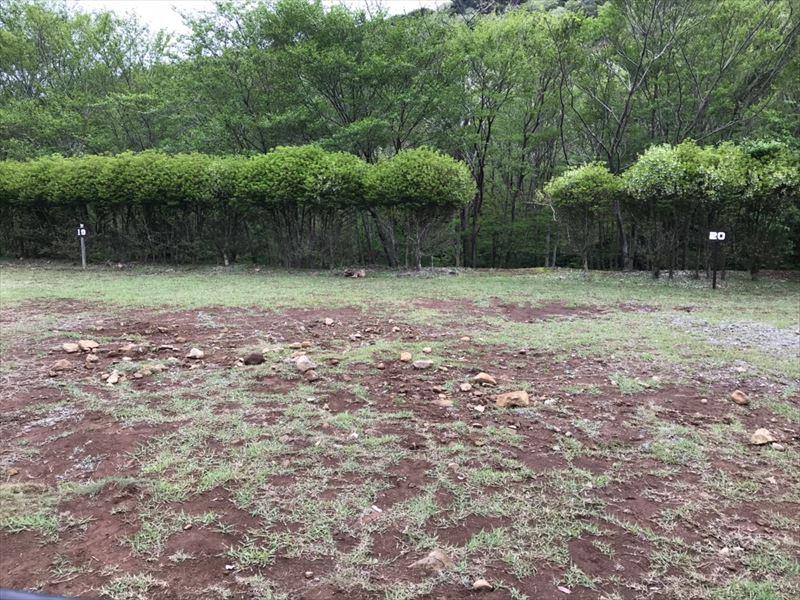 沼津市市民の森 サイト19、サイト20付近に石がごろごろ・・・