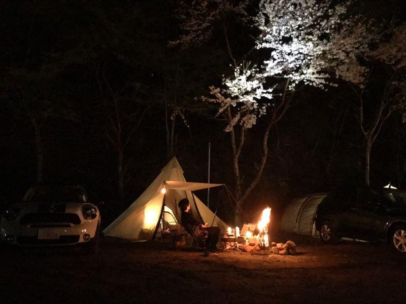 青野原オートキャンプ場 設営05 夜桜
