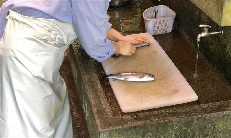 富士養鱒漁業協同組合直営釣り堀 内蔵除去無料サービス