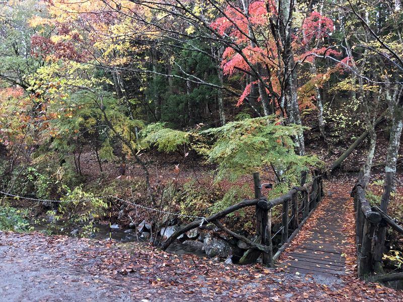 道志の森キャンプ場 隠れ家サイトの紅葉