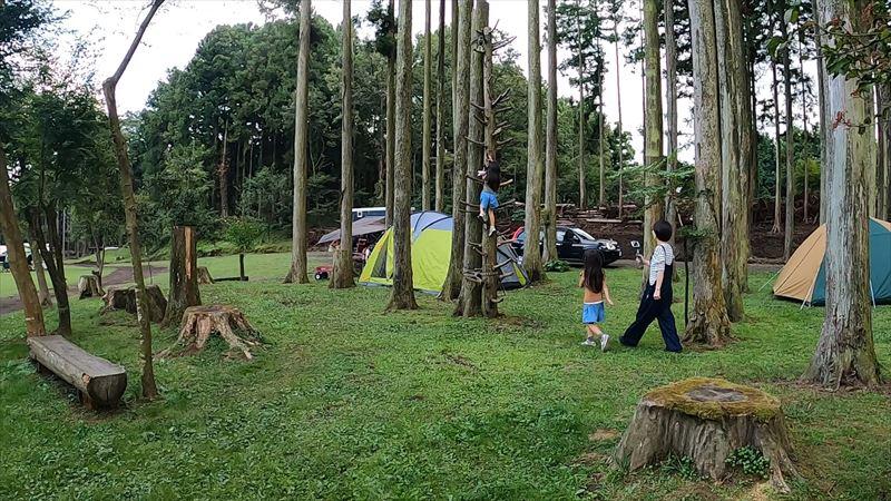 長田山荘キャンプ場 木登り